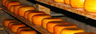 Cheese Manufacture